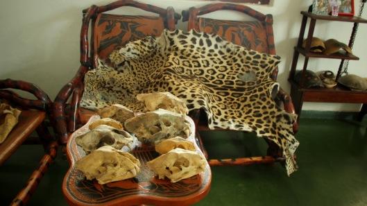 San Miguelito Jaguars